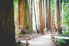 The Redwoods by NWA Photographer Lissa Chandler